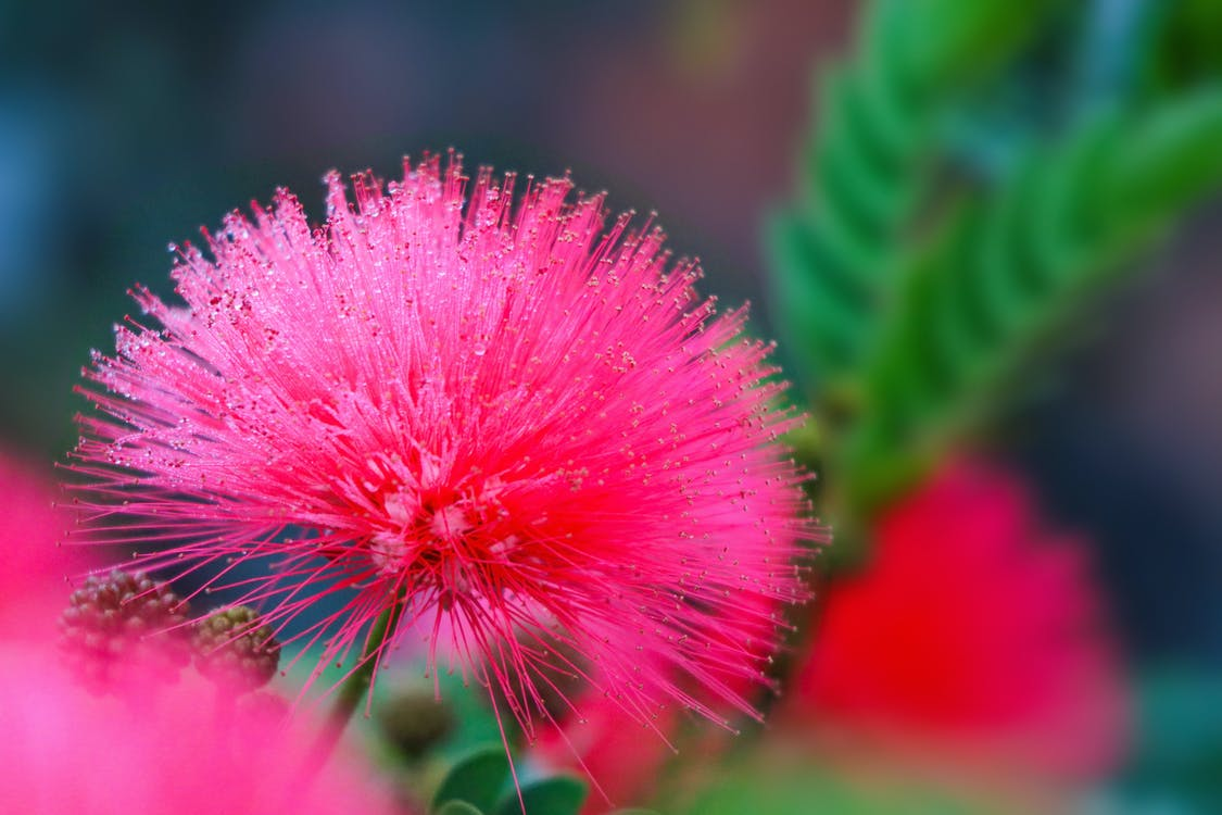 Free stock photo of dew, dewdrop, dewdrops