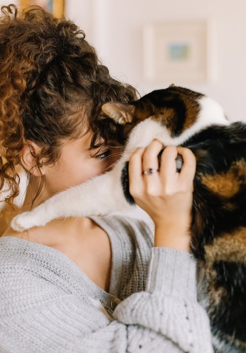 Fotos de stock gratuitas de animal, felino, gato