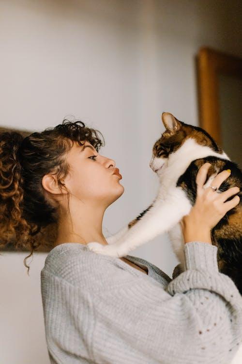 Fotos de stock gratuitas de animal, besando, felino