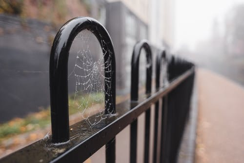 Metal fence with spider web