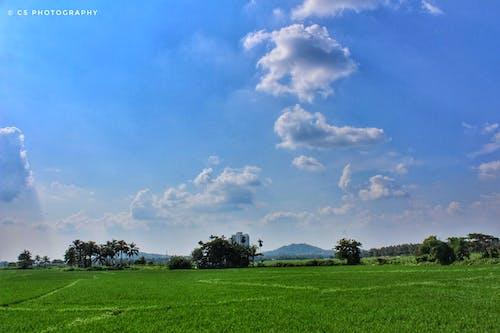 Foto profissional grátis de cenário, céu azul, céu limpo, ecológico