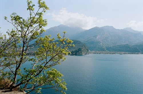 Picturesque scenery of blue sea rippling near rough rocky mountains and lush tree on sunny day