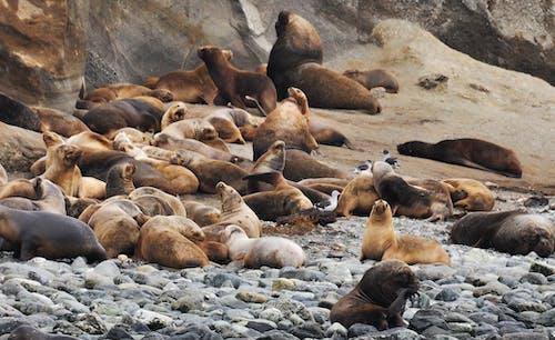 Fotos de stock gratuitas de agua, animales, costa, descansando