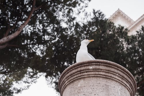 From below of seabird with white plumage sitting on ribbed column under overgrown trees while looking away in city park