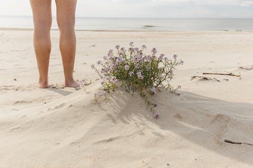 Crop traveler on sandy beach against sea and blooming flowers