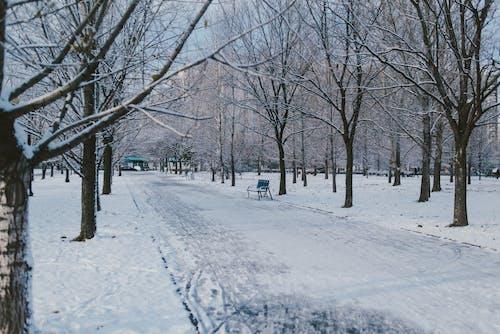 감기, 건조한, 겨울의 무료 스톡 사진