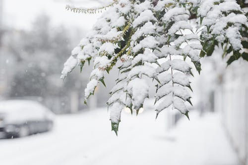 Green branches of tree covered with snow growing in town near walkway with car and fences on blurred background during snowfall in winter time