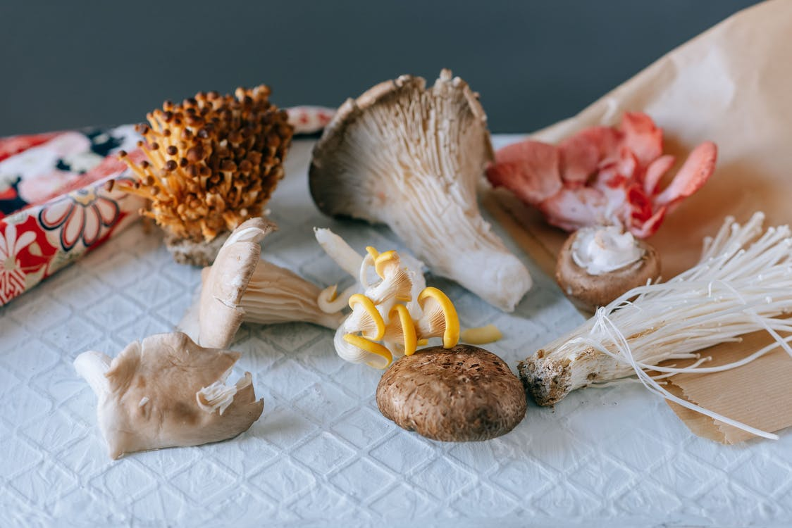 From above of various exotic mushrooms placed on textured white table on green background