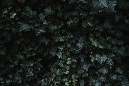 คลังภาพถ่ายฟรี ของ กอ, การเจริญเติบโต, ชีววิทยา