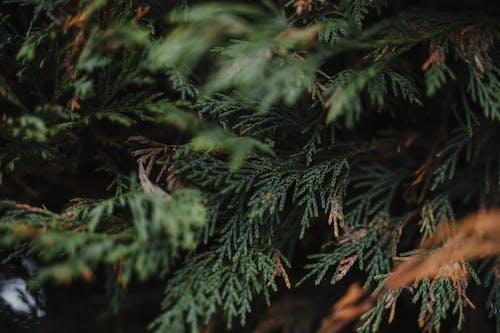 Kostenloses Stock Foto zu ast, biologie, botanik