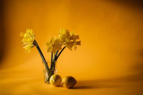 Immagine gratuita di bicchiere, fiori, giallo