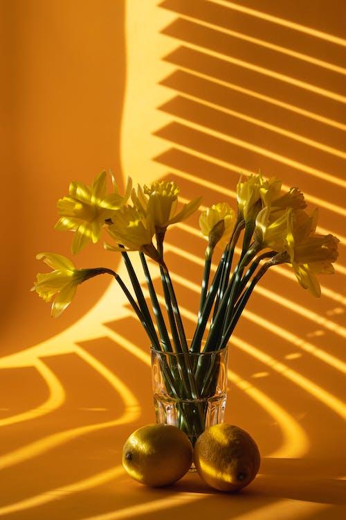 คลังภาพถ่ายฟรี ของ การถ่ายภาพหุ่นนิ่ง, ดอกไม้, มะนาว