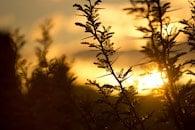 dawn, nature, sky