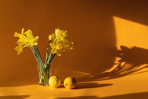 Fotobanka sbezplatnými fotkami na tému aromatický, čerstvý, chutný