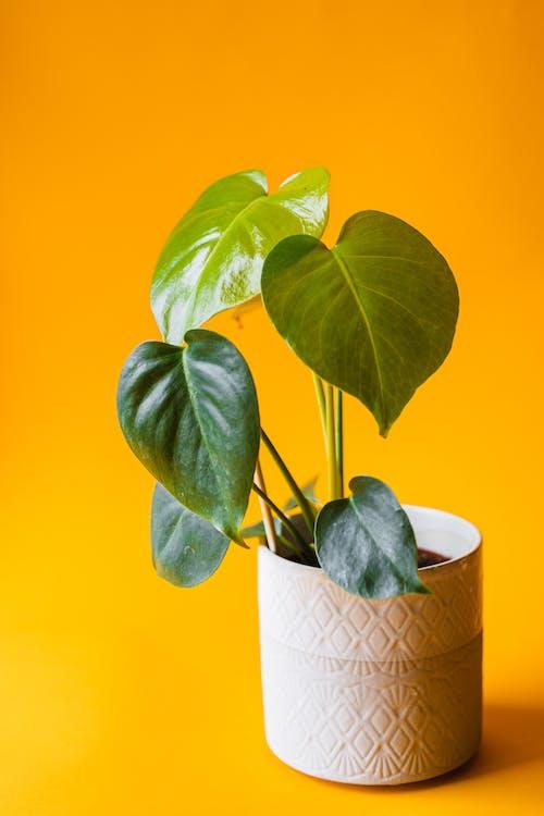 Безкоштовне стокове фото на тему «copy space, ботаніка, вертикальні постріл»