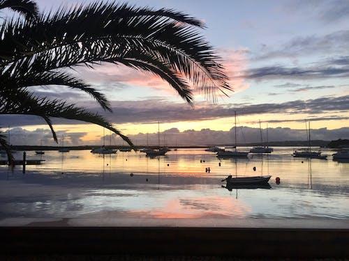 Darmowe zdjęcie z galerii z łodzie, odbicie, palmtree, zachód słońca