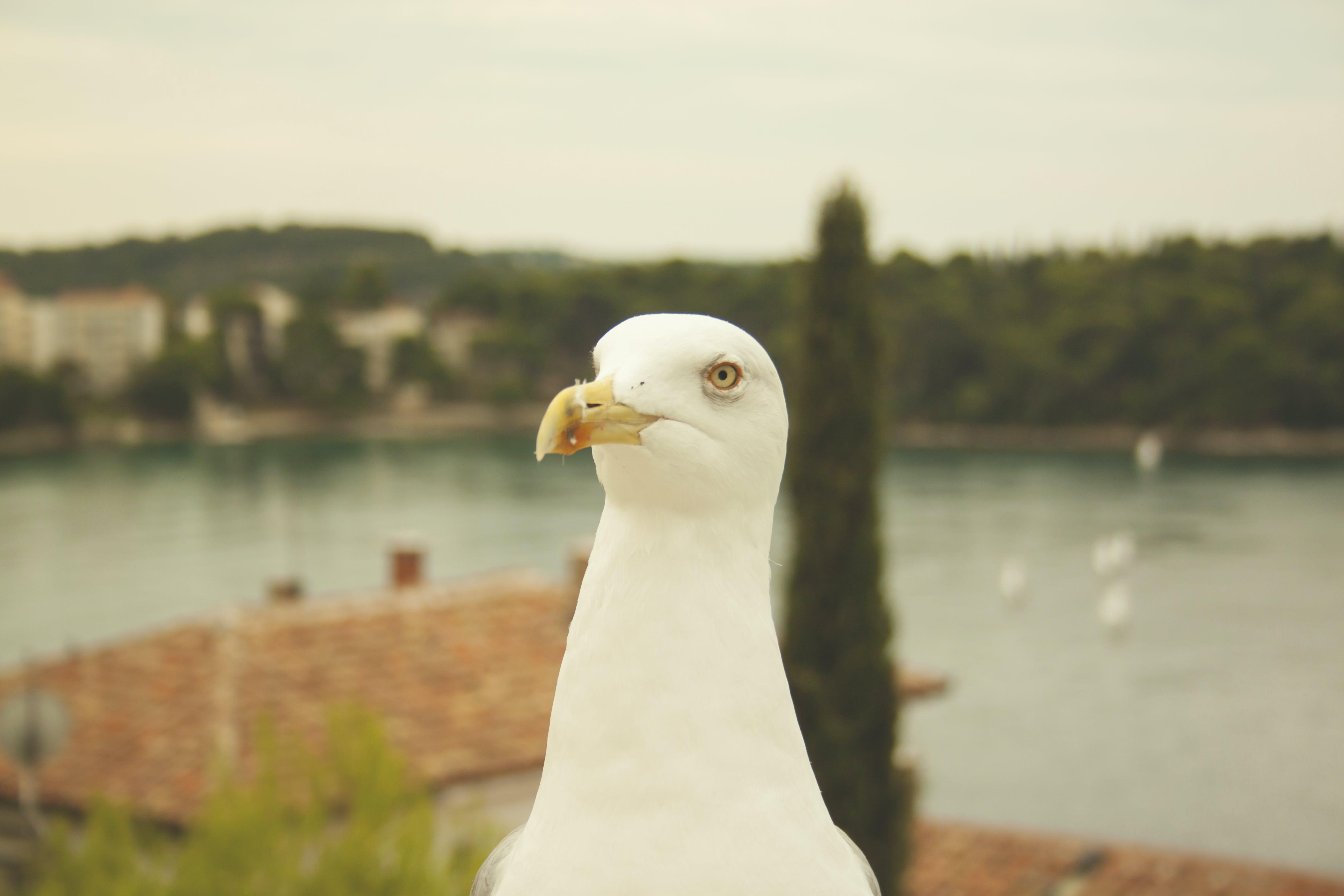 Free stock photo of nature, sea, seagull, seagulls