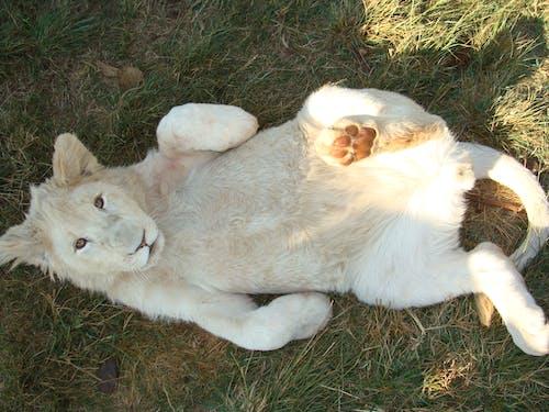 動物, 動物園, 可愛, 哺乳動物 的 免费素材照片