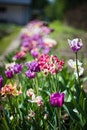 flowers, garden, grass