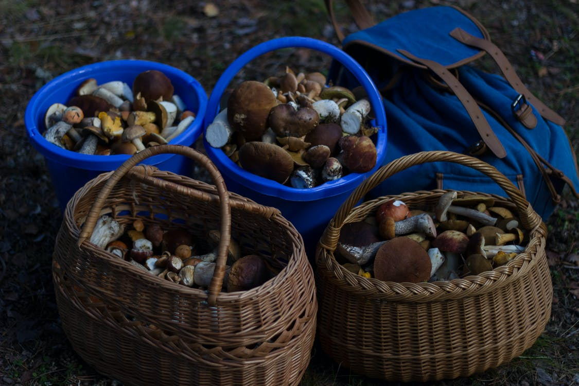 Four Basket of Mushrooms L