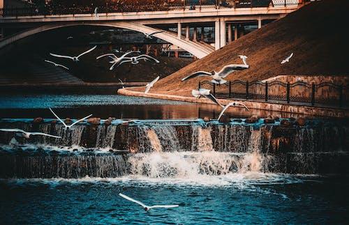 Foto d'estoc gratuïta de aigua, ales, arquitectura, atmosfèric