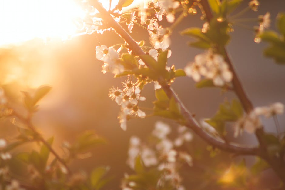 White Petaled Tree during Daytime