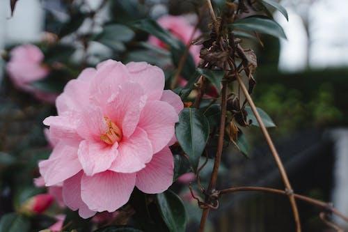 Fotos de stock gratuitas de al aire libre, flor, flora