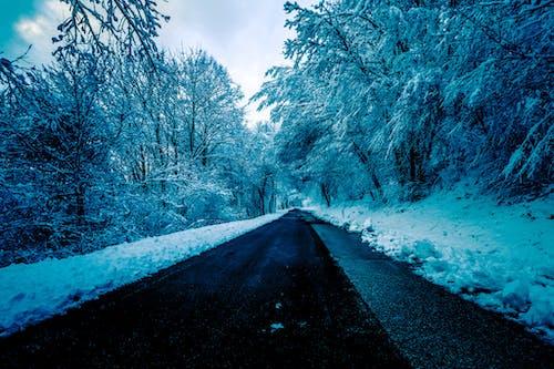 Darmowe zdjęcie z galerii z asfalt, długi, droga, drzewa