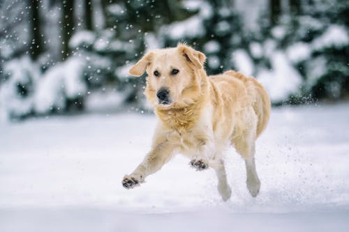Free stock photo of animal, canine, cold
