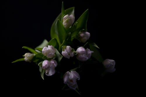 Free stock photo of blumen, blumenstrauss, flora