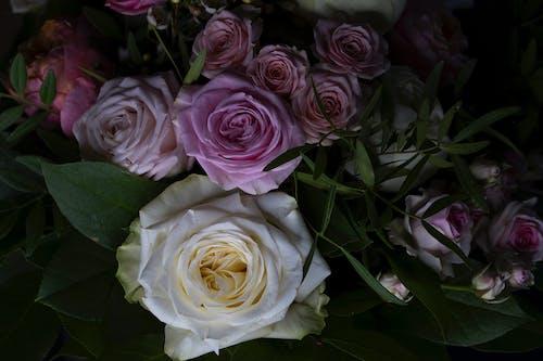 Free stock photo of blumenstrauss, buquett, rosen
