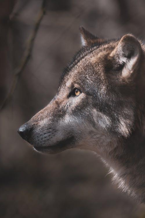 Free stock photo of animal, canine, dog