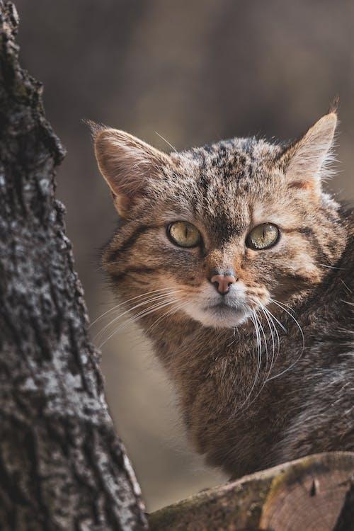 Brown Tabby Cat on Tree