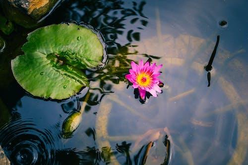 Foto d'estoc gratuïta de aigua neta, blanc, Buda, color