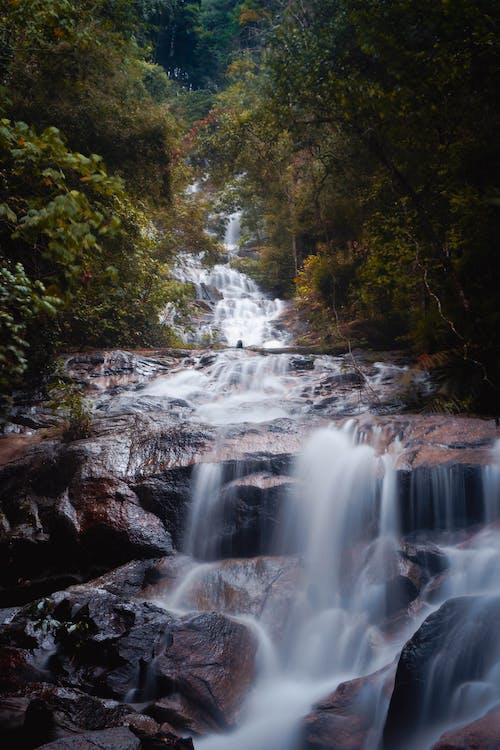 Free stock photo of cascade, creek, fall