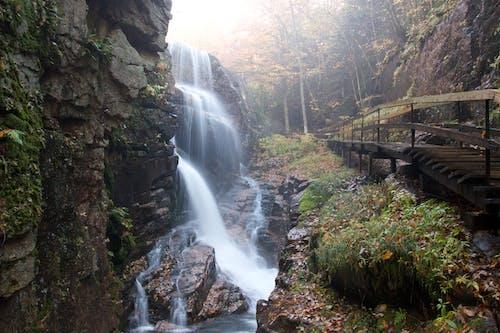 คลังภาพถ่ายฟรี ของ กระแสน้ำ, ธรรมชาติ, น้ำตก, หิน