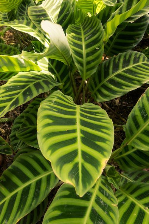 Free stock photo of beautiful, botanical, bright, close-up