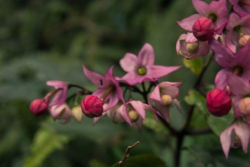 Free stock photo of beautiful, bloom, blooming, botanical