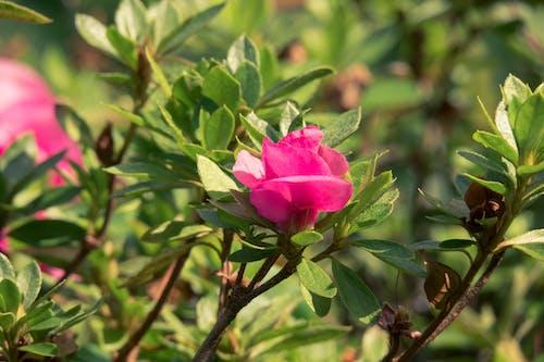 Ảnh lưu trữ miễn phí về cận cảnh, cánh hoa, Hawaii, hệ thực vật