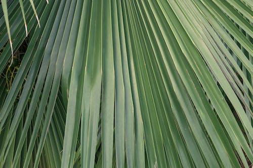 Free stock photo of background, beautiful, botanical