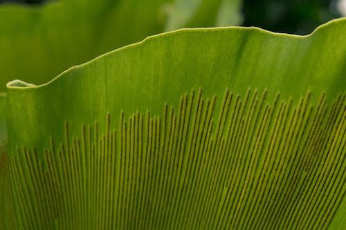 Ảnh lưu trữ miễn phí về cận cảnh, Hawaii, hệ thực vật, hoang dã