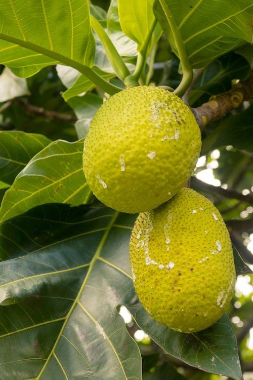 Free stock photo of beautiful, berry, botanical