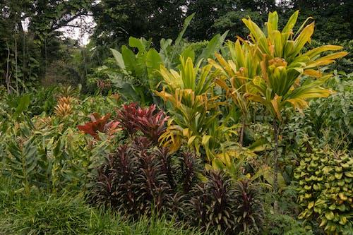 Free stock photo of background, exotic, garden