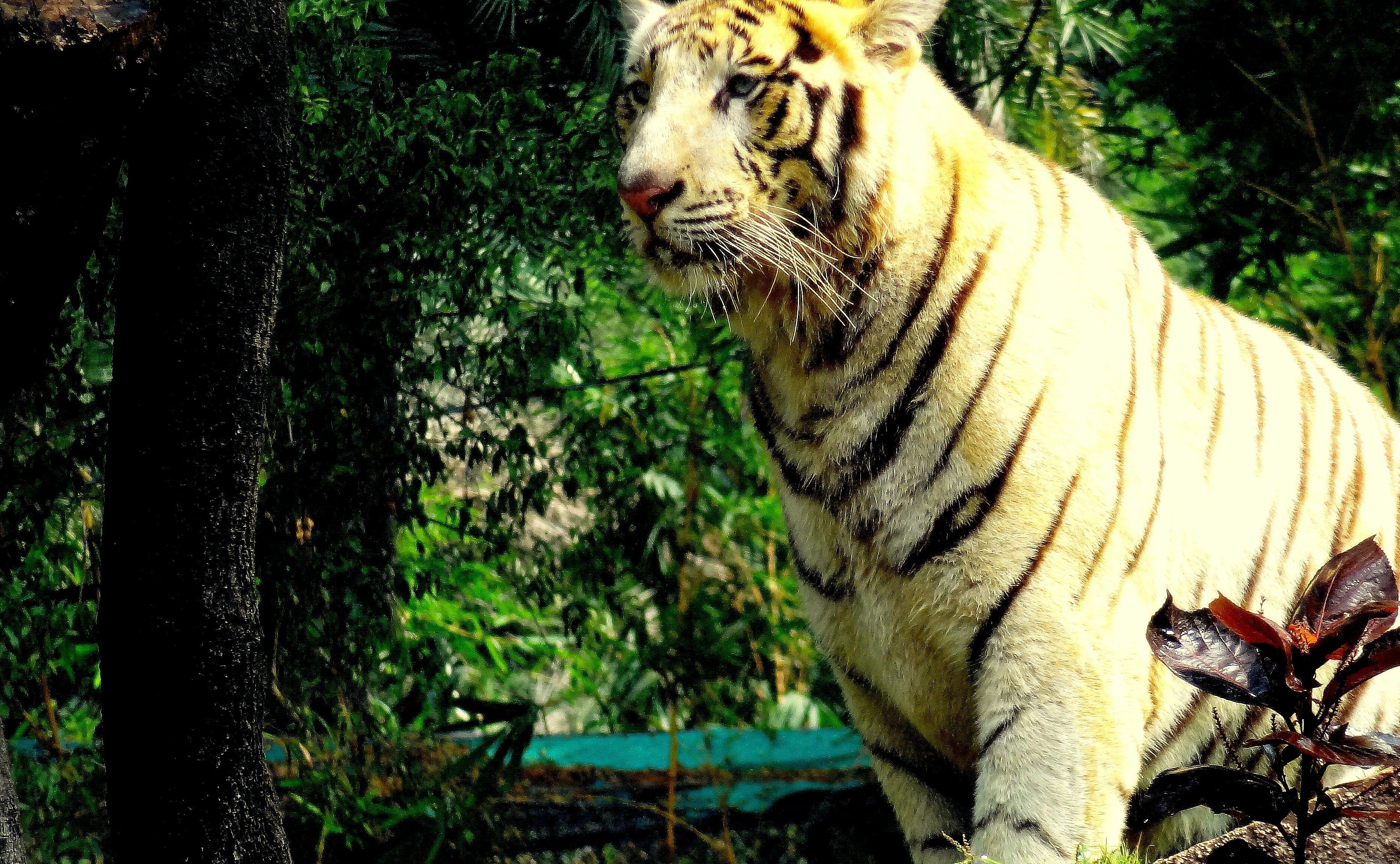 Free stock photo of animal park