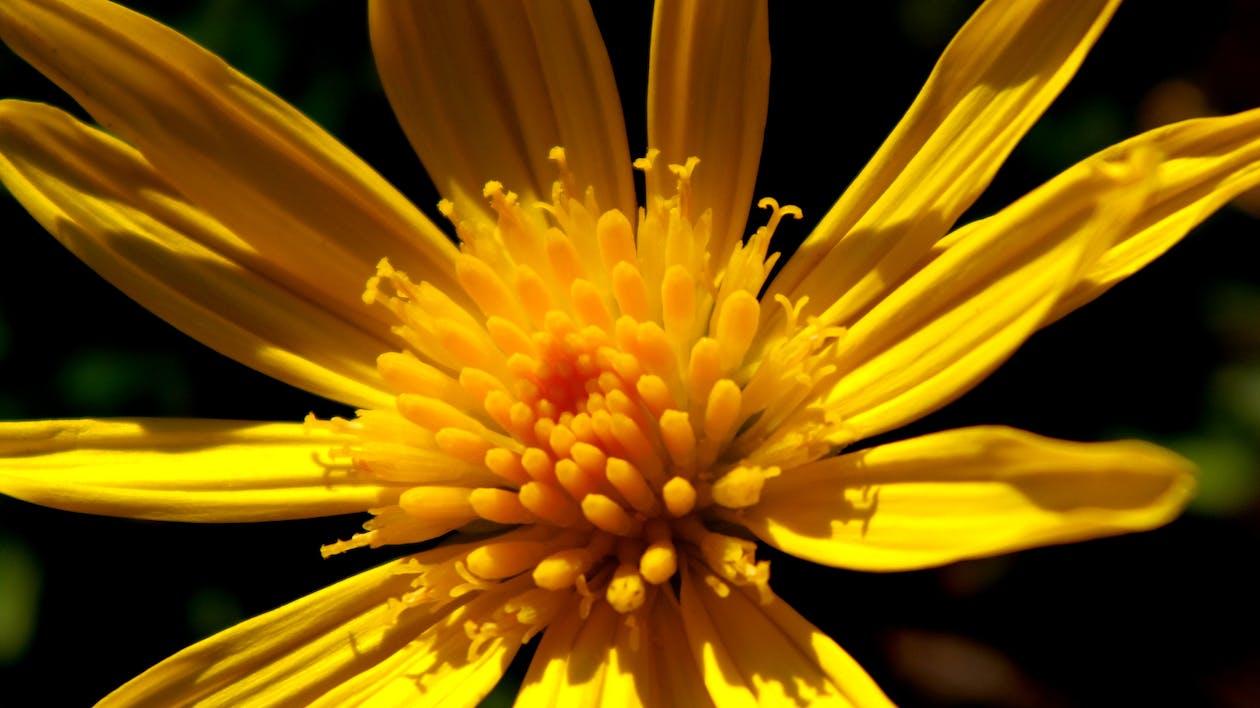 amarelo, atraente, aumento
