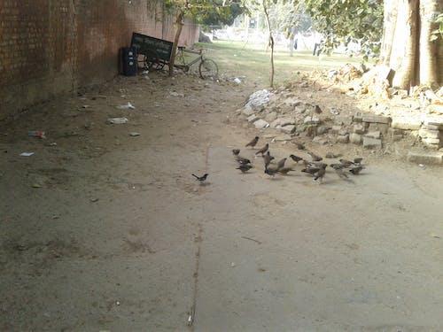 Free stock photo of black sparrow