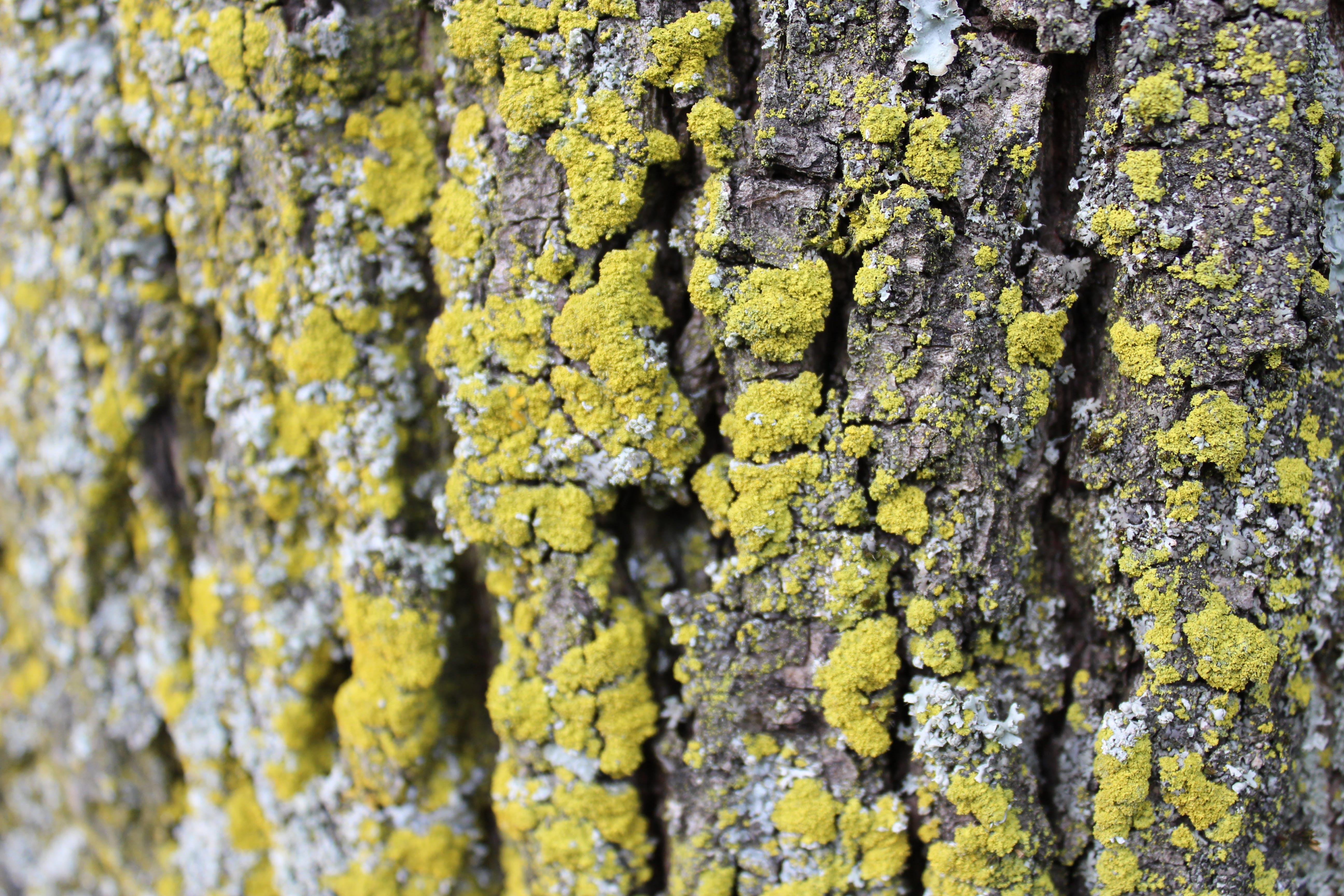 Free stock photo of nature, tree bark, yellow