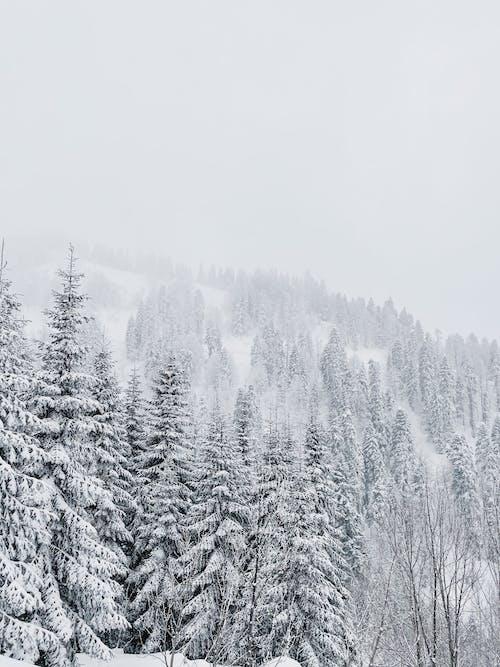 Kostenloses Stock Foto zu baum, berg, eis