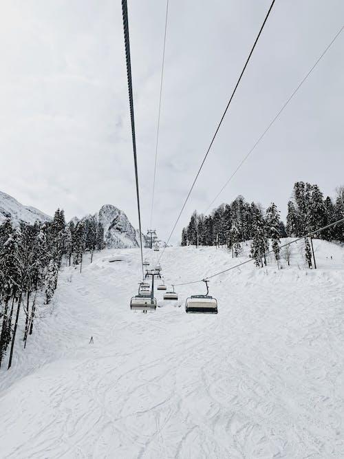 下雪的, 似雪, 冬季 的 免费素材图片