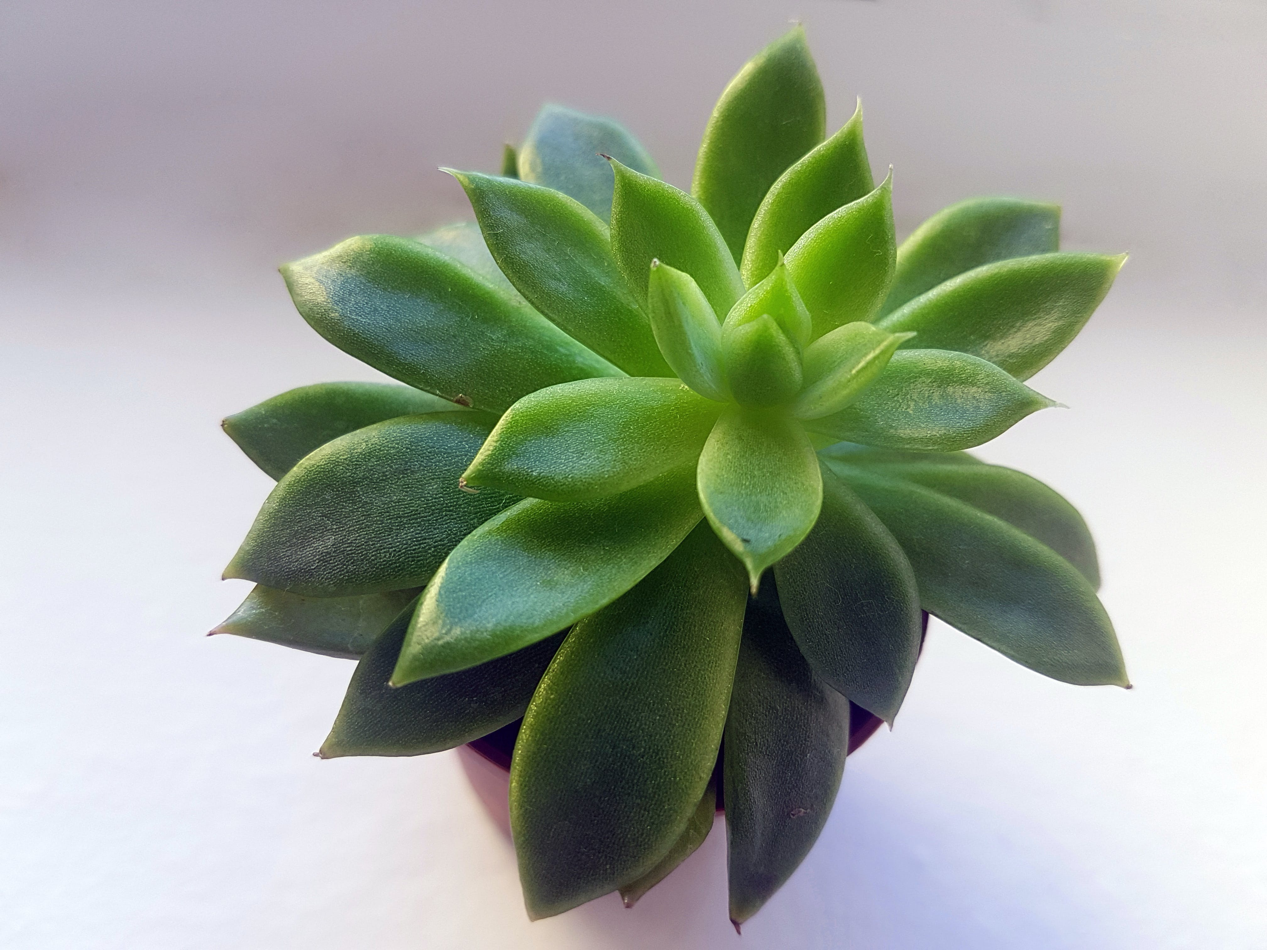 Green Succulent With Brown Pot